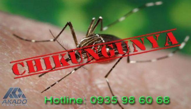 11 bệnh nguy hiểm do muỗi gây ra