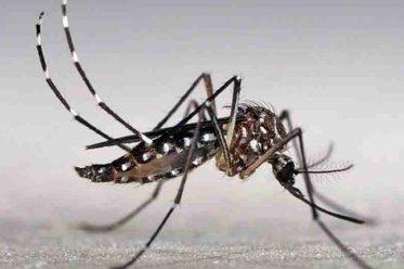 11 Giải pháp chống muỗi ngăn côn trùng đơn giản, hiệu quả