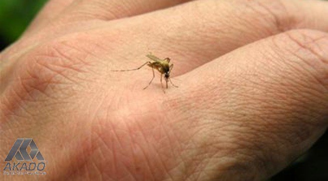 Muỗi đốt gây ảnh hưởng rất lớn đến sức khỏe | Cửa lưới chống muỗi AKADO