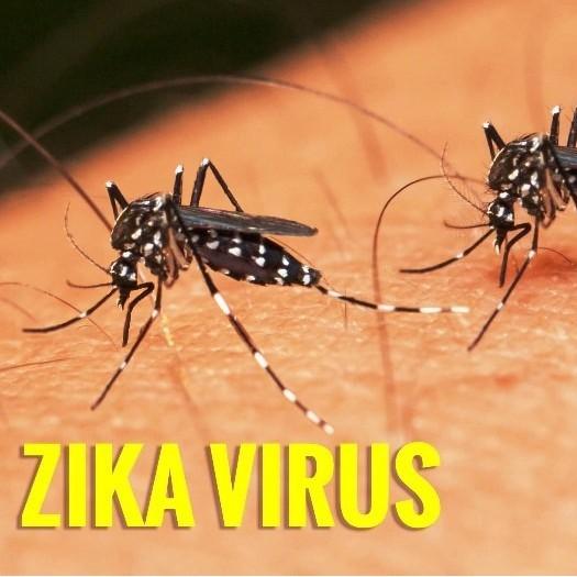 Dịch Bệnh Virus Zika